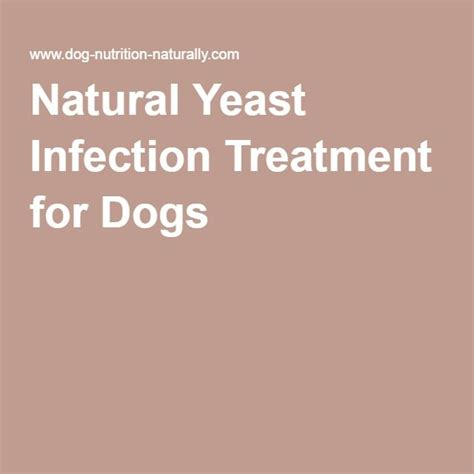 best candida treatment best 25 yeast infection treatment ideas only on