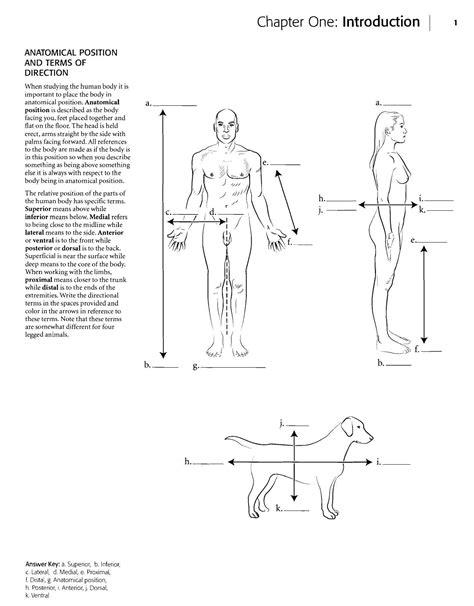 Kaplan Anatomy Coloring Book Exercise Anatomy Coloring