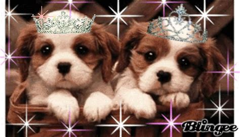 puppy s are puppy s picture 76731674 blingee