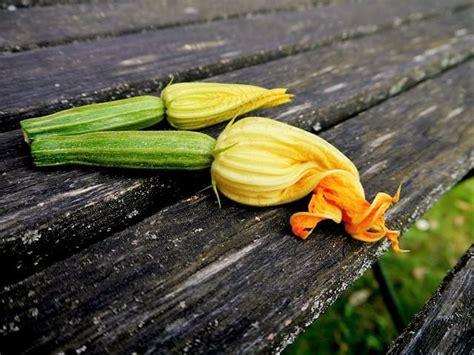 come cucinare zucchine come cucinare le zucchine misya info