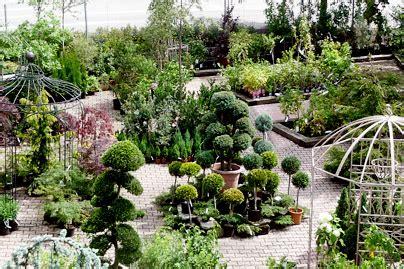 große zimmerpflanzen kaufen ruptos gelb grn wandfarbe