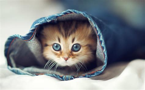 beautiful kittens cute cats beautiful wallpapers images for desktop hd