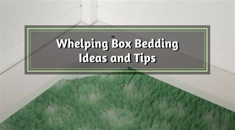 whelping box bedding whelping box bedding ideas and tips canine whelping box