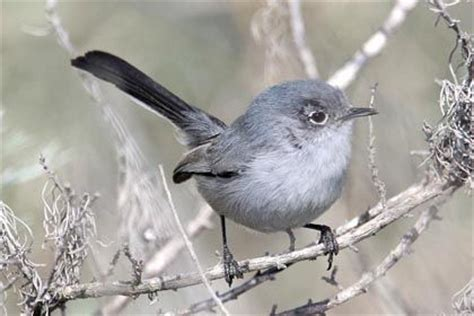31 best birds of southern california images on pinterest