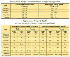 goldendoodle puppy weight chart goldendoodle puppy growth chart about the poodle