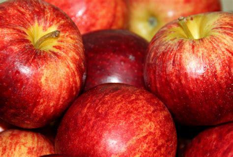 alimenti calorie per 100 grammi alimentazione corretta 10 cibi a calorie zero dissapore