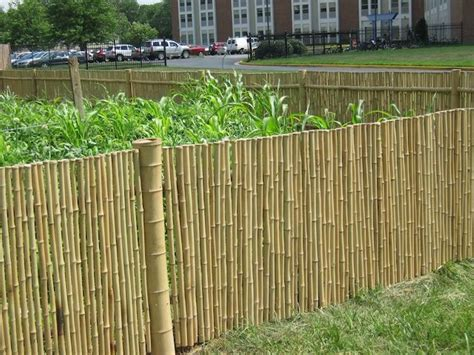 Cheap Garden Fence by 11 Best Images About Privacy Fence On Cheap