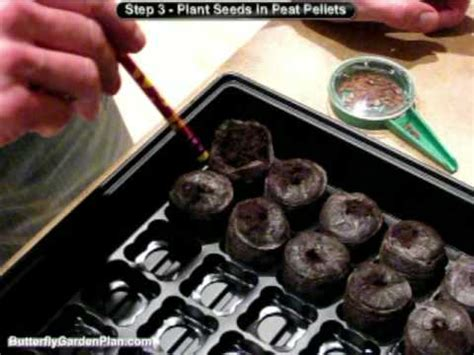 grow seeds indoors seed germination jiffy peat pellets