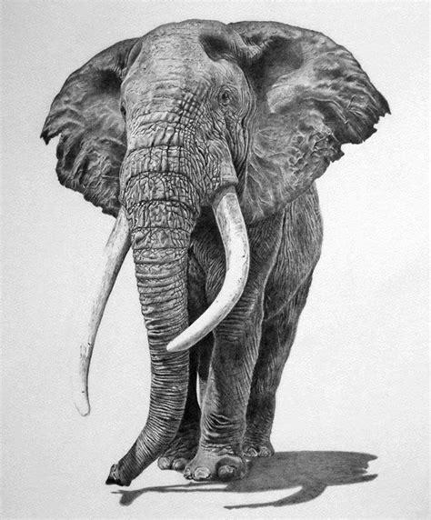 dibujos realistas animales 25 beautiful and realistic animal drawings around the
