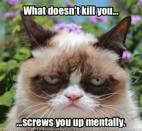 Professor Cat Meme - psychology grumpy cat and professor on pinterest