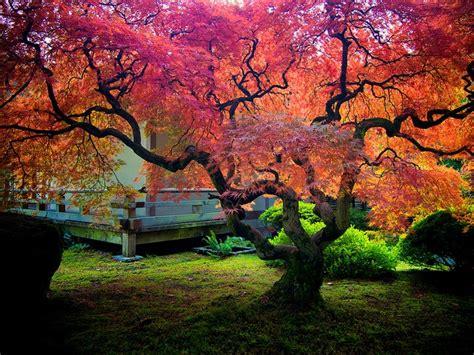 botanical gardens portland inspiring visual arts
