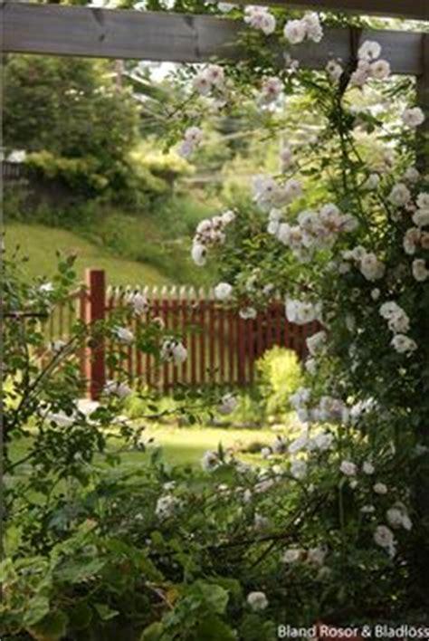 garten ideen 5091 white roses climbing g 228 rten und bl 252 ten