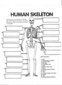 Bones Worksheet digestive system labeling worksheet answers human skeleton