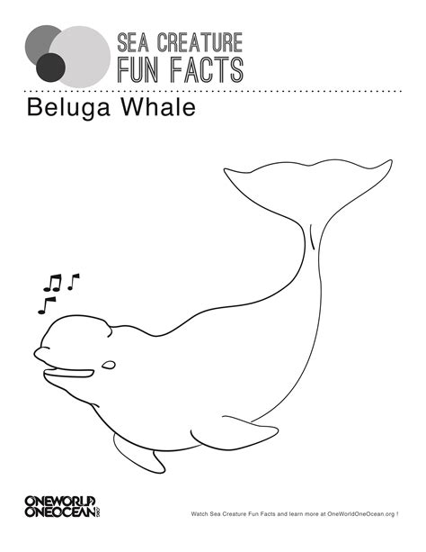 coloring page baby beluga beluga whale one world one ocean