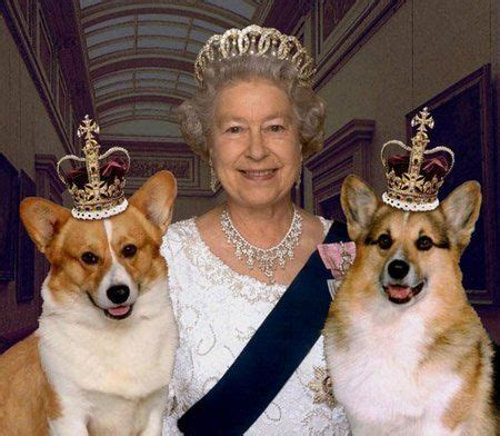 the queens corgis 17 ways to tell corgis are the right dogs for you corgis