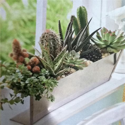 indoor window sill planter indoor windowsill planter window herb planter the