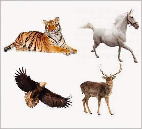 gambar hewan omnivora pemakan daging dan tumbuhan motorcycle review and galleries