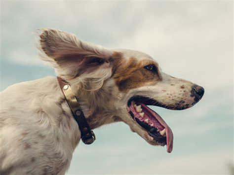 compagnie aeree accettano cani in cabina la lista delle compagnie aeree accettano cani a bordo