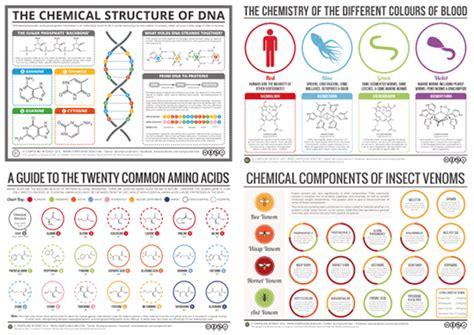 compound interest infographics