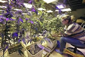 biggest online plants store colorado marijuana shops make 28 000 each on first day of