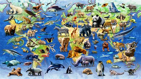 Where All The Animals by All Animals In The World Pictures Www Imgkid The