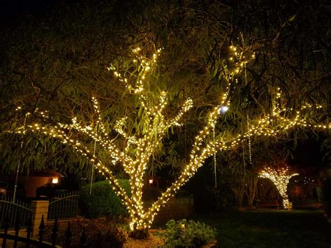 tree top with lights vegas event lights lighting service detail