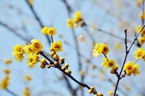 fiore invernale 10 fiori da balcone invernali