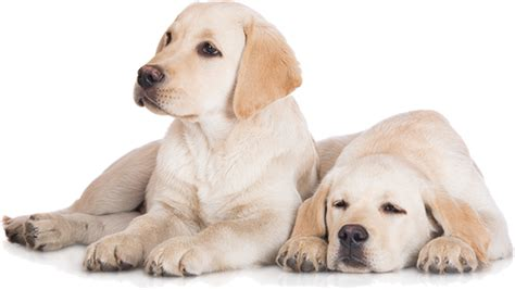 products that strengthen the bond between pet pet parent