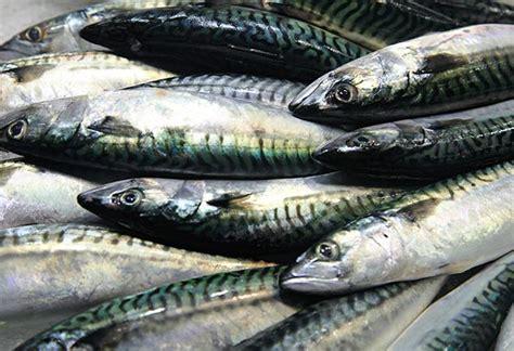 Kerupuk Ikan Cap Ikan Tengiri 3 jenis ikan populer sebagai bahan membuat kerupuk ikan