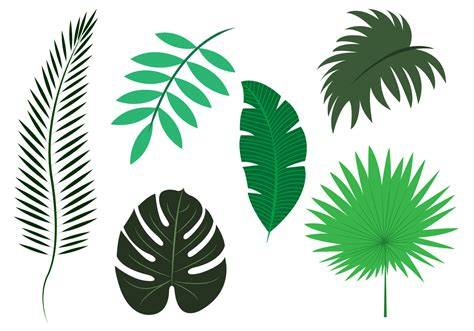 palm leaf pattern vector vector set of palm leaves download free vector art