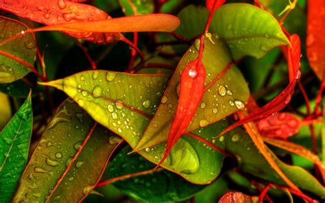 desktop wallpaper hd large size heavy rain desktop hd wallpaper others wallpapers