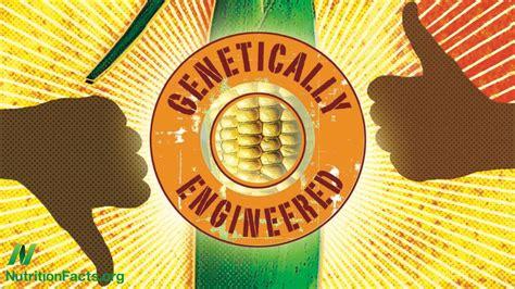Why GMO?s are the way to go   The Diamondback