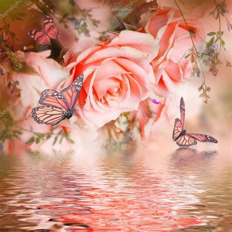 imagenes de rosas y mariposas bellas hermosas rosas y mariposas foto de stock 169 seqoya 107901144