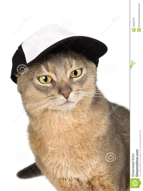Abyssinian Cat In Baseball Cap Isolated On White Stock ...