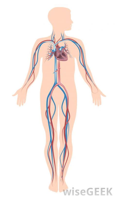 free united states map that can be edited what makes up the human vascular system with pictures