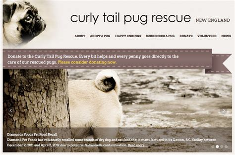 nw pug rescue curly pug rescue website needmore designs