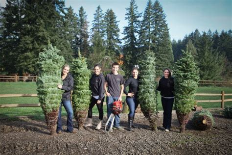 u cut xmas trees langley u cut fresh trees farms in tualatin or