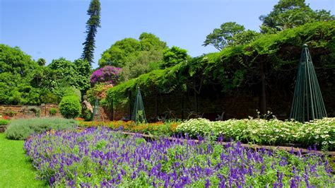 Botanic Gardens View Flowers Pictures View Images Of Africa And Indian