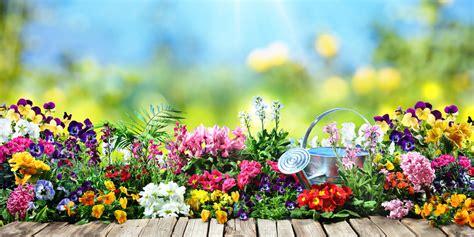 summer gardening summer gardening tips loans 2 go loans