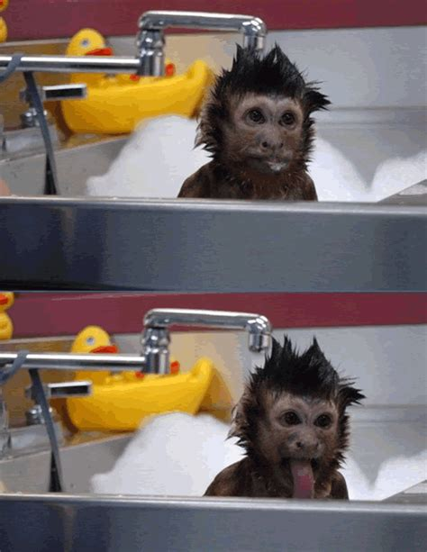 an adorable goofy monkey has some taking a bath this