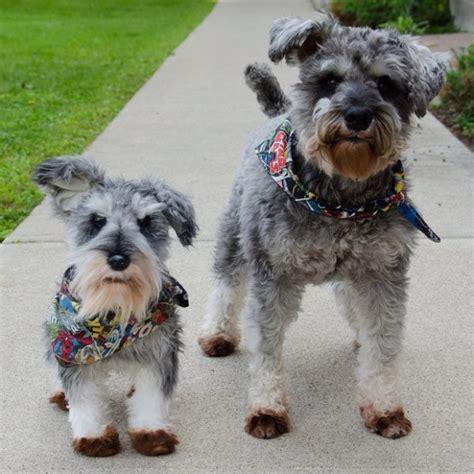 Boneka Hewan Anjing Peliharaan perusahaan mainan bikin kloning hewan peliharaan