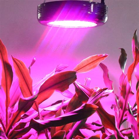 can you grow with a black light ufo 100w gardening spectrum black led grow light
