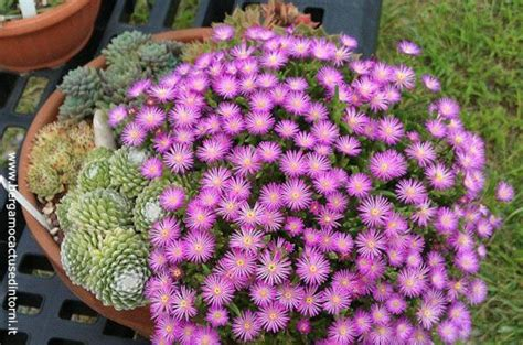 fiori da mettere sul balcone compo grasse500 fioriere invernali composizioni di piante