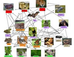 forest ecosystem food web