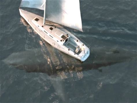 megalodon shark attacks boat shark attack boat south africa driverlayer search engine