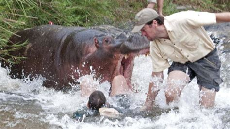 youtube video of hippo chasing boat world s most deadly animals youtube