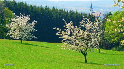 Rosa Blühende Bäume 1716 by Die 97 Besten Fr 252 Hling Sch 246 Ne Hintergrundbilder F 252 R Desktop