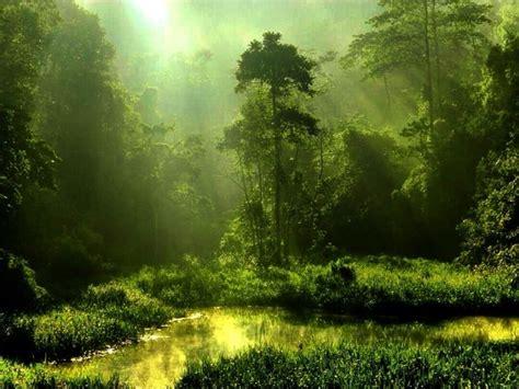 image gallery malaysia nature