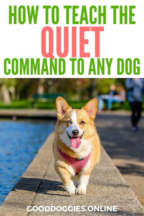 how to teach any dog to stop barking humanely effectively how to teach the quiet command and get your dog to stop