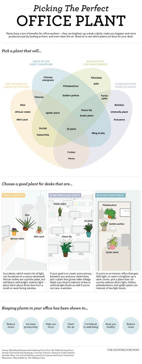 Best Plants For Office With No Windows Ideas Best 25 Work Office Decorations Ideas On Pinterest Cubicle Ideas Office Cubical Decor And